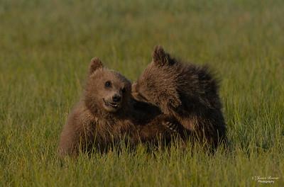 Kodiak cubs