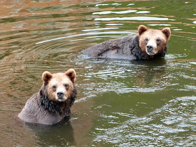 Bathing buddy bears