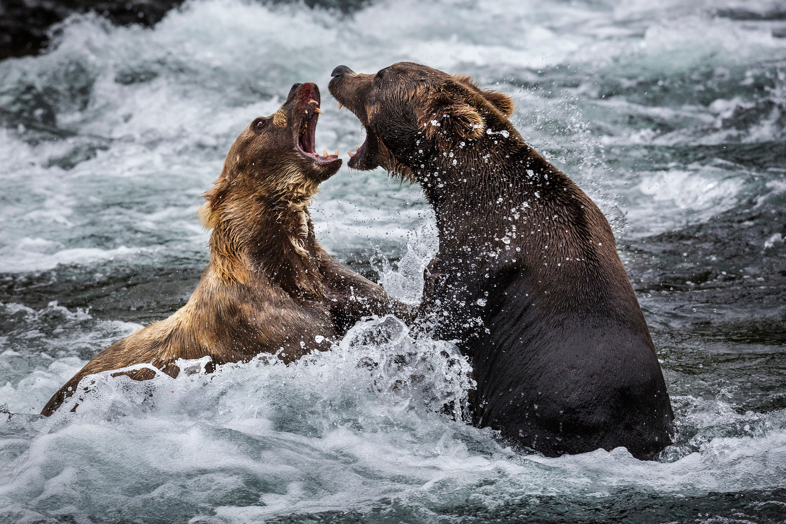 Don't mess with Mama Bear