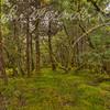 Alaskan Rain Forest #3