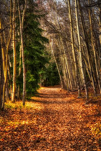 The Golden Path through the Trees