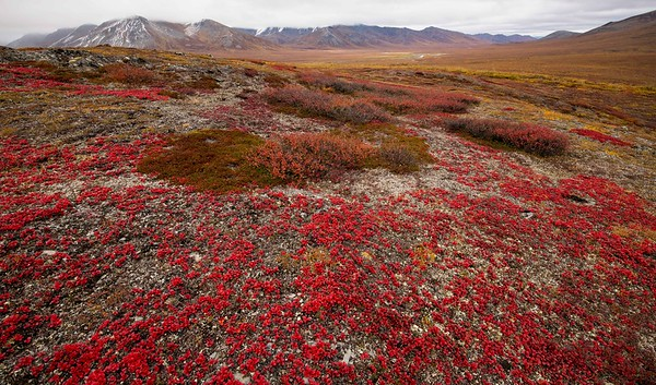 Bearberry Land