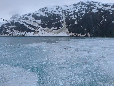 Flight over icy waters, Alaska