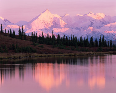 Alaska, Denali National Park, / Snow covered Mount Brooks reflected in foggy Wonder Lake in  sunset light with Black spruce, Picea mariana, silhouetted. 904H5