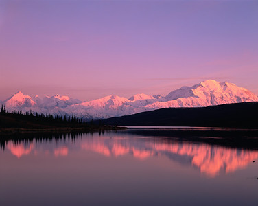 Alaska, Denali National Park, / Snow covered Mount McKinley, dominates the horizon line reflected in Wonder Lake in rosy sunset with Mt. Brooks on left. 904H6