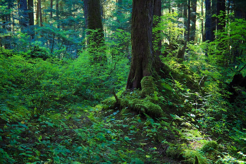 Alaskan Green