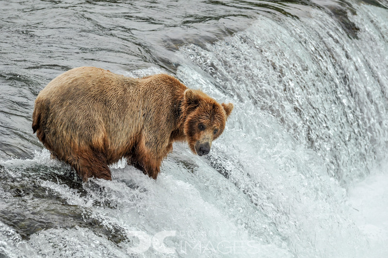 Fishing Brooks Falls