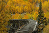 Abandoned Railroad Trestle - Wrangell-St. Elias National Park & Preserve, Alaska - Mary Anderson - September 2009