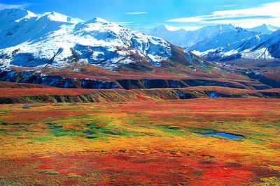 Autumn colors in Denali National Park, Alaska