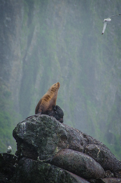Photo Tour of Alaska: Sea Lions