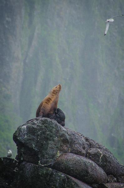 Photo Tour of Alaska: Sea Lions