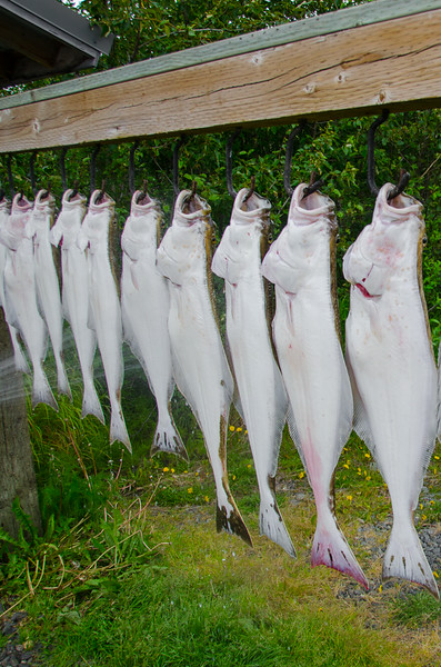 Photo Tour of Alaska: The day's catch