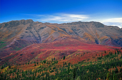 Autumn In The Yukon Territory.