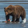Bear & Seagull