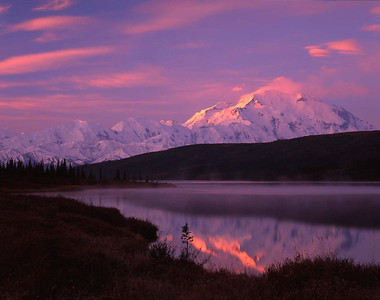 Alaska, Denali National Park, / Snow covered Mount McKinley, dominates the horizon line reflected in Wonder Lake in rosy sunrise light with Black spruce, Picea mariana 904H8