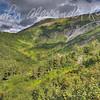 Mount Roberts Area #1