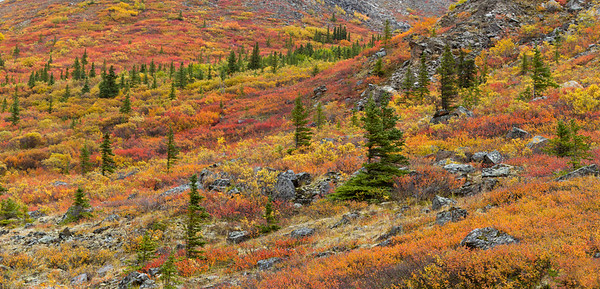 Autumn tundra, Denali National Park