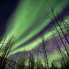 Aurora Borealis Silhouetted Trees
