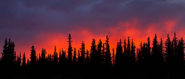 Taiga sunset, Denali National Park