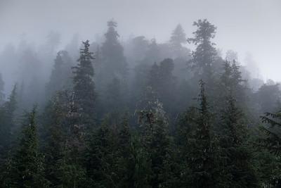 Rainforest and Fog, Warm Springs Bay
