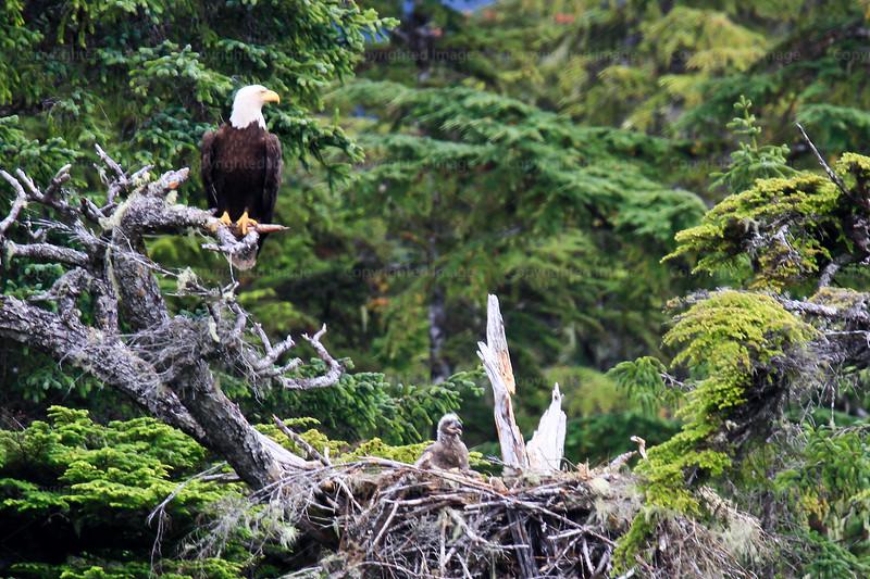 CRay-Alaska19-2082