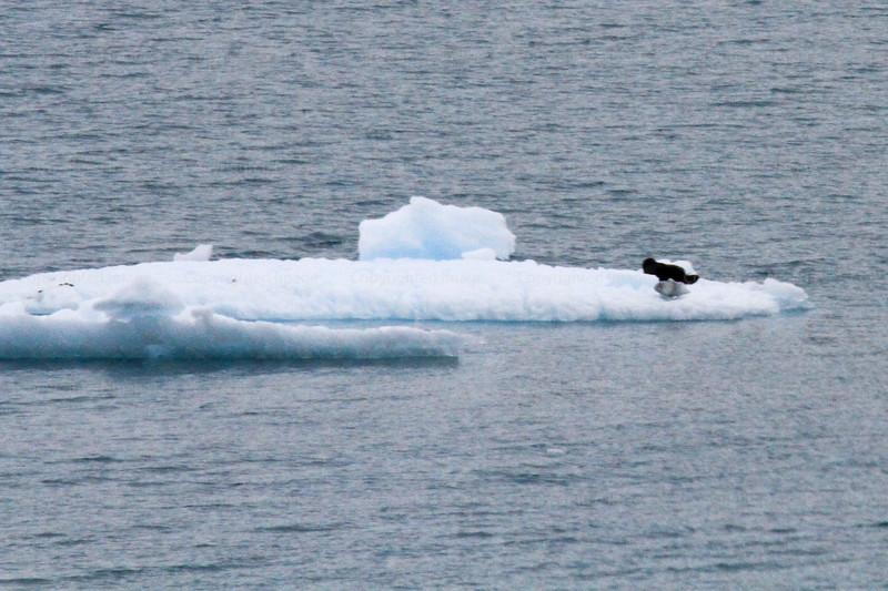 CRay-Alaska19-1061