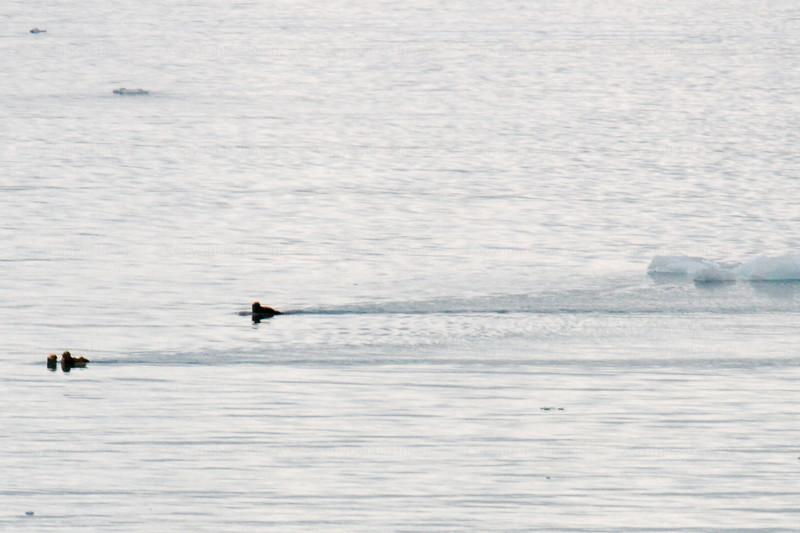 CRay-Alaska19-0990