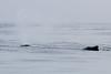 CRay-Alaska19-1164