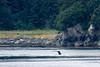 CRay-Alaska19-1186