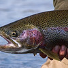 Fly Fishing Photos from Alaska Sportsman's Lodge - Kvichak River, Alaska