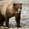 Alaska Fly Fishing - Jim Klug Photos