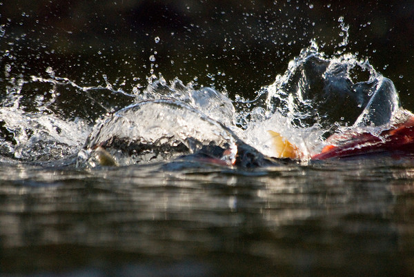 Alaska Fly Fishing - Jim Klug Photos
