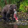 Reel Wilderness Adventures - Wood-Tikchik Wilderness Region, Alaska - © Jim Klug Outdoor Photography / Yellow Dog Flyfishing Adventures