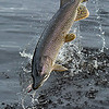Alaska Pike Fishing with Midnight Sun Trophy Pike Adventures - Yukon Drainage, Alaska.  Jim Klug Photos - 2011