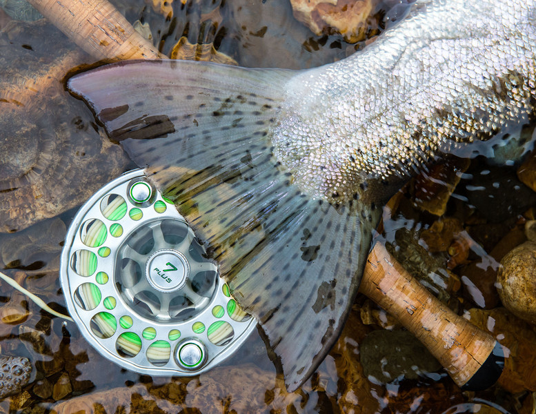 Tongass National Forest Steelhead Photos – Adventurous Mothership - © Jim Klug Outdoor Photography / Yellow Dog Flyfishing Adventures