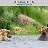 A Brown Bear mock-fight  while fishing. Taken by Hugh Rose in July 2005.