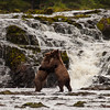 Bear cubs fight under a waterfall