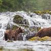 Waterfall with Bears