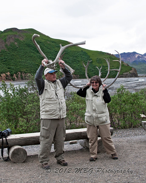 Well here are two of the caribou that we came across.