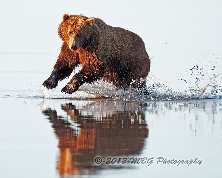 This is one of my favorites from the Lake Clark NP tour. I think I am going to frame this one and hang it.