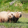 Another shot of the twins. We saw these two several times during the day just about everyday we were at Lake Clark!