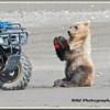 MG8062015- Bears (210)