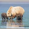 MG8032015- Bears (12)