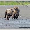 MG8042015- Bears (860)