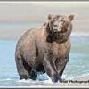 MG8042015- Bears (109)