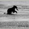 MG8062015- Bears (531)