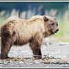 MG8032015- Bears (302)