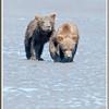 MG8032015- Bears (134)
