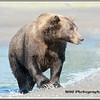 MG8042015- Bears (112)