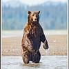 MG8042015- Bears (368)
